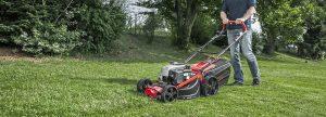 Стрижка, полив и мульчирование: 3 главные операции по уходу за газоном