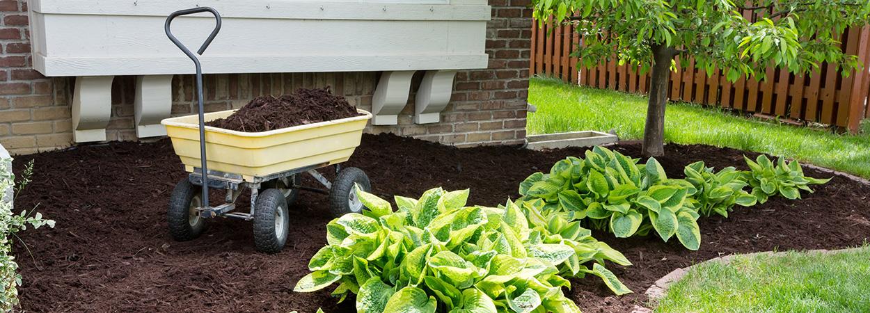 Мульчирование растений: используем садовые аксессуары AL-KO для украшения грядок и клумб