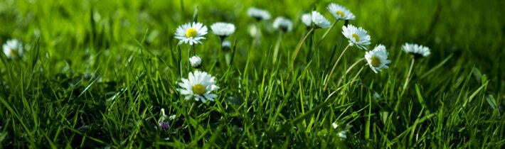 5 видів газонів: вибір травосуміші для посіву та поради з догляду