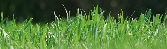Корисні поради AL-KO: як відновити зіпсований газон після зими