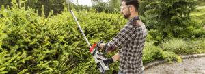 Живая изгородь в саду: секреты фигурной стрижки растений