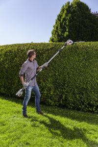 Один из вариантов топиарных композиций – живая изгородь прямоугольного сечения.